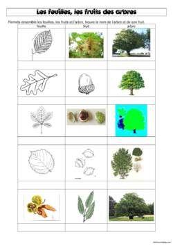 DDM : les feuilles, les fruits et les arbres de notre bois
