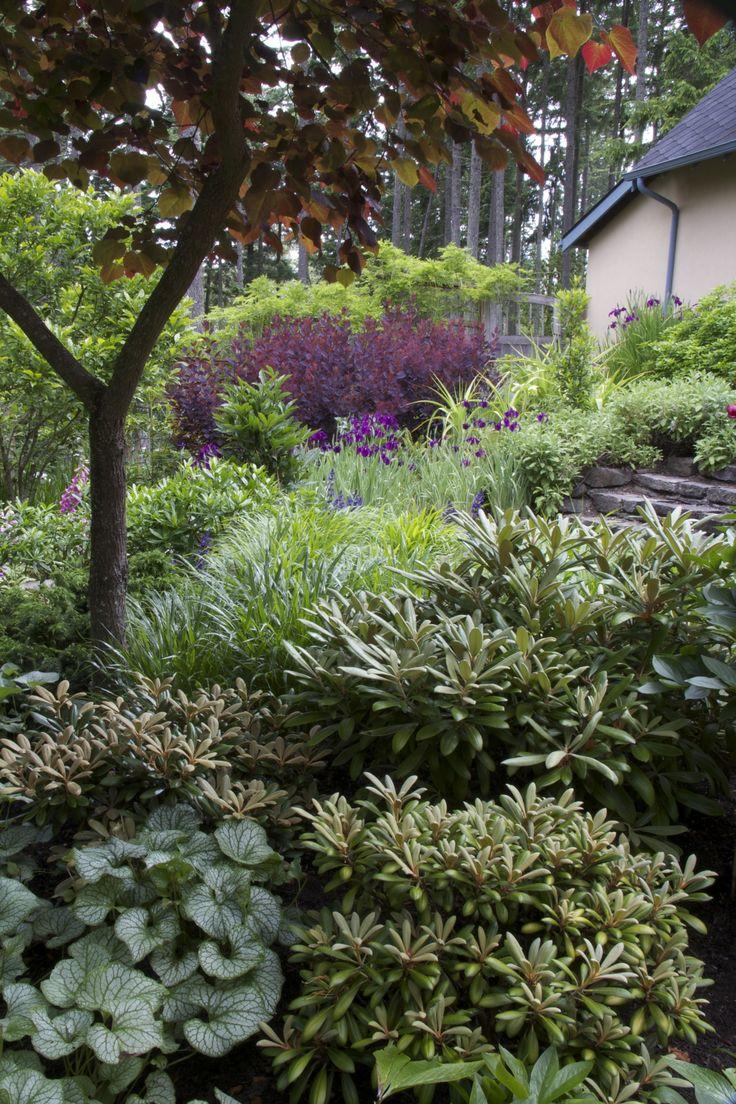 De 9 b sta vriga rhododendron och azaleor bilderna p for The garden design sk