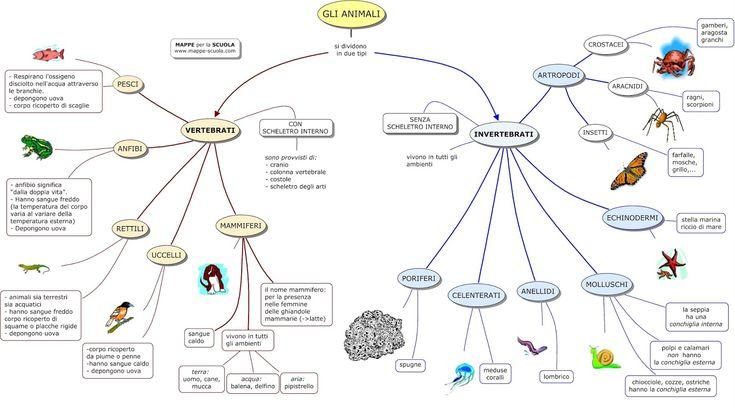 Mappa concettuale sulla  classificazione degli ANIMALI VERTEBRATI  e ANIMALI INVERTEBRATI                     STAMPARE LA MAPPA: 1) Clicc...