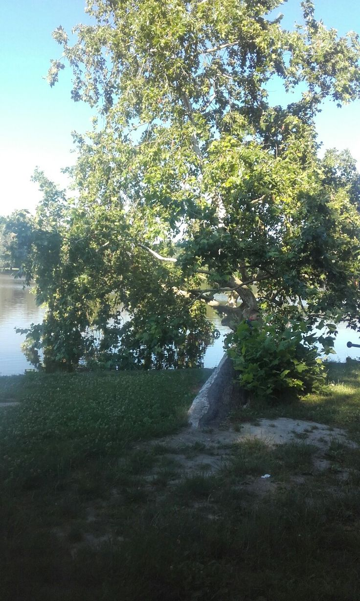 Tata. Cseke-tó. Angol park.