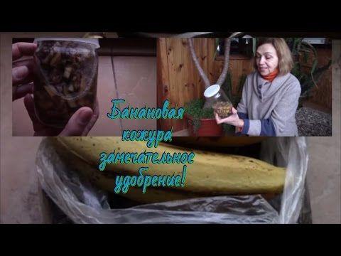 Банановая кожура и растения.  Заготовьте  кожуру бананов!