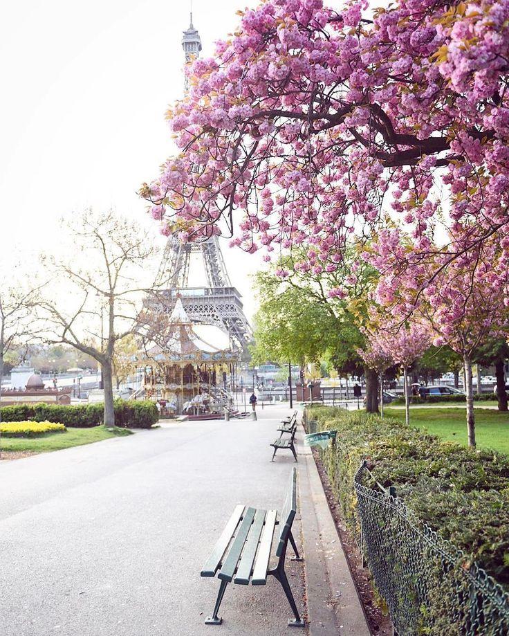 My favorite city, my favorite season and my favorite trees...
