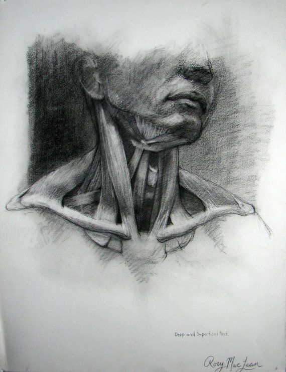 Anatomy Drawing  Original Charcoal  by Rory Alan by rorbotics, $160.00