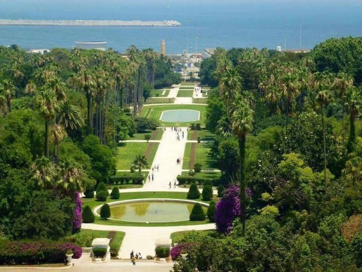 The Jardin D'essai Hama, in Alger. The original 1932 Tarzan movie was partly filmed here - the garden contains species of plants from all over the world.