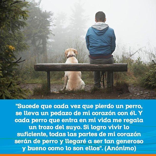"""Make one special photo charms for your pets, 100% compatible with your Pandora bracelets. """"Sucede que cada vez que pierdo un perro, se lleva un pedazo de mi corazón con él. Y cada perro que entra en mi vida me regala un trozo del suyo. Si logro vivir lo suficiente, todas las partes de mi corazón serán de perro y llegaré a ser tan generoso y bueno como lo son ellos"""". (Anónimo) #FraseDelDíaCVP #Mascotas #CVP #PetLovers #Pets #Perros #Gatos #Dogs #Cats #Mascotagram #Petstagram #PetShop…"""