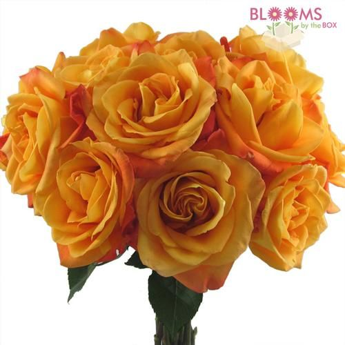 Wholesale Rose Voodoo Orange 40cm - Blooms by the Box