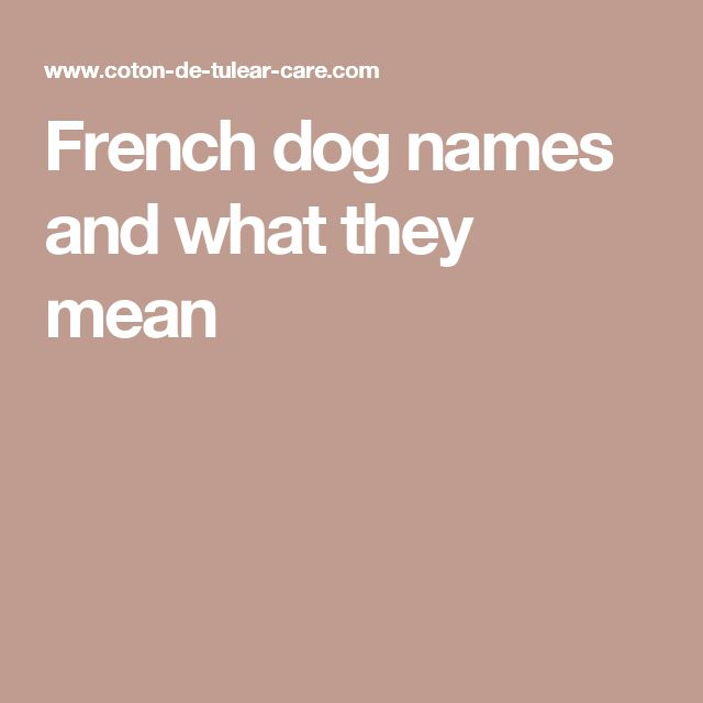 French dog names and what they mean