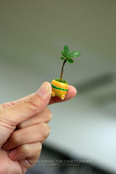 mini bonsai:):)