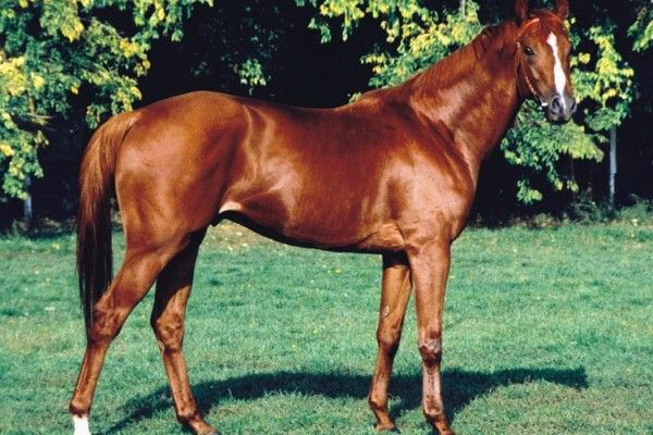 Film Shoot about Legendary Race Horse Kincsem to Start in October ‹ Daily News Hungary