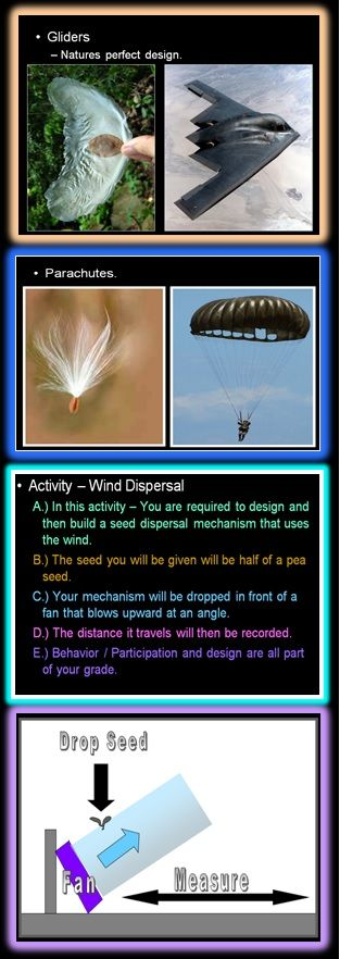 Seed Dispersal Challenge (Wind).  After seeing many examples of seeds that use wind as their dispersal mechanism, students create their own wind catching design.  I usually have lots of tissue paper, tape, plastic wrap, cotton balls, and other light weight materials available.  The other mechanisms of dispersal are included.  Link to lesson enclosed.