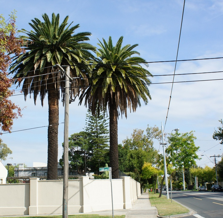 Palms, Balaclava Road, Caulfield North on the corner of Lumeah Street. (Photo by Victor Perton)
