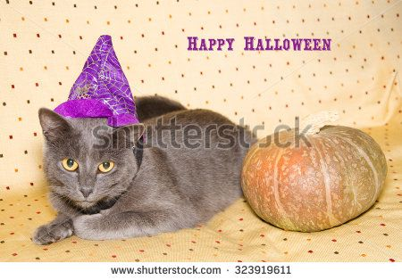 Happy halloween card with cat and pumpkin. Scary halloween pumpkin jack-o-lantern and chartreux kitten on the sofa. #Halloween #Card #Cat #Kitten #Chartreux #Pet #Pumpkin #Festive #Holidays #HappyHalloween #Witch #Wizard #Hat #FunnyAnimals