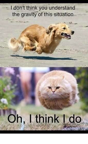 Funny Animal Pictures With Captions | funny caption pictures