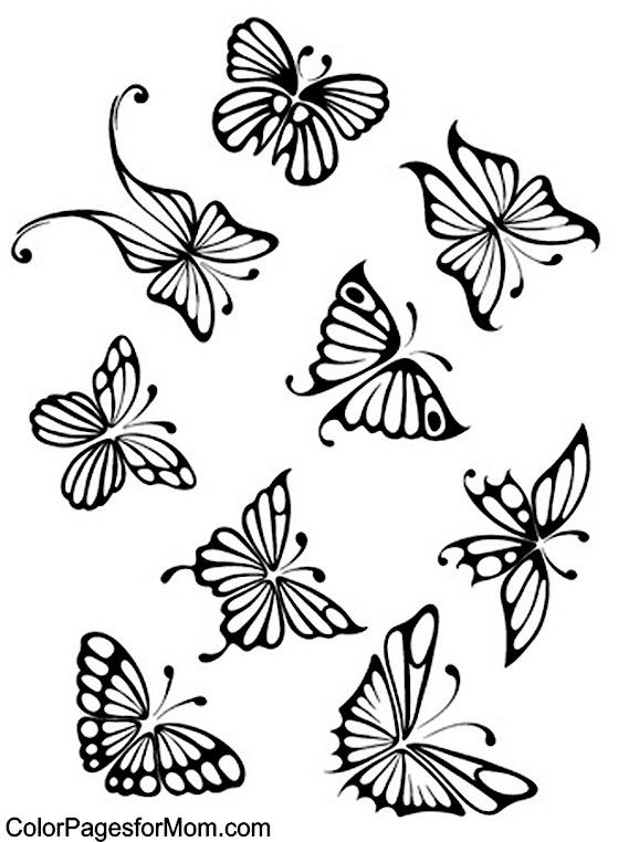 Butterfly Coloring Page 53 pergamano