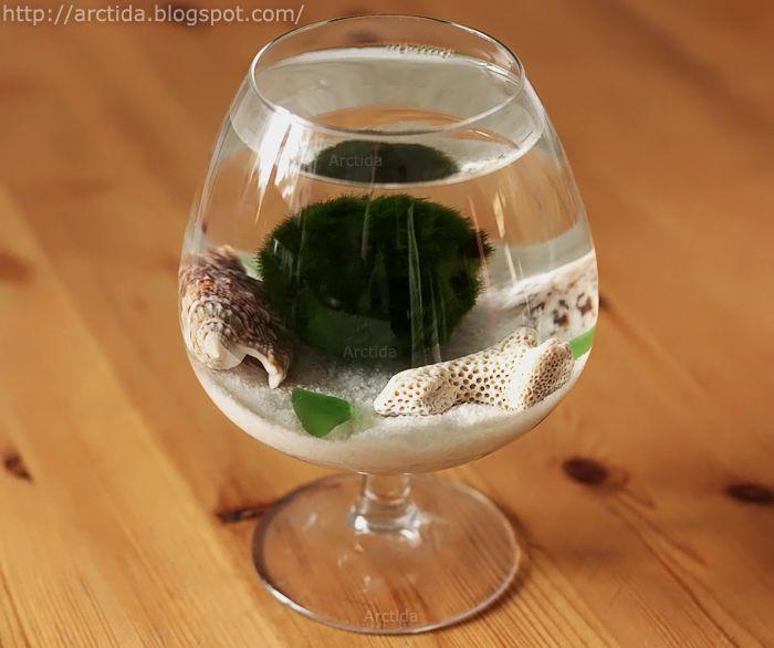 Arctida's creations: DIY tutorial Marimo moss ball mini aquarium with sea treasures