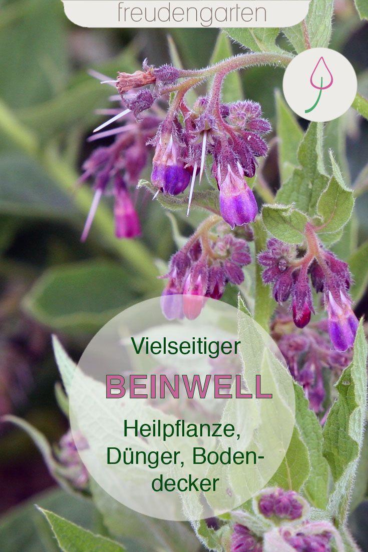 Echten Beinwell Pflanzen Ernten Und Im Garten Verwenden In 2020 Beinwell Pflanzen Bienenfreundlicher Garten