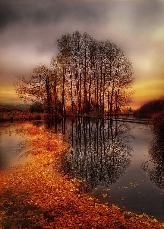 Autumn, beautiful!: Picture, Autumn, Color, Sunsets, Fall Trees, Golden Paths, Places, Landscape, Photo