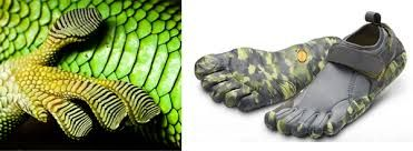 Image result for biomimicry in design