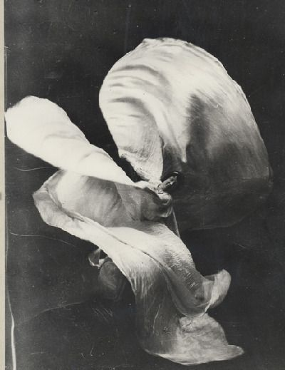 Loie Fuller 1862-1928 was a pioneer of both modern dance and theatrical lighting techniques