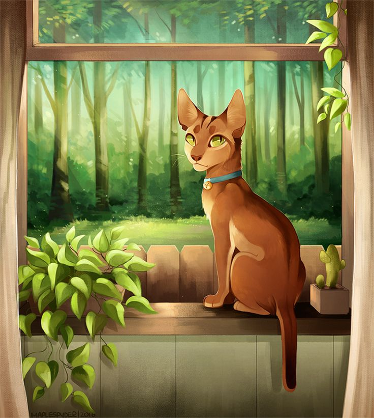 Into The Wild Graypaw Warriors: 4361 Best Images About Warrior Cats On Pinterest