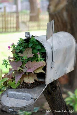 I usually do not mail box planters..but the choice of plants here are great.  Not toooo Country!