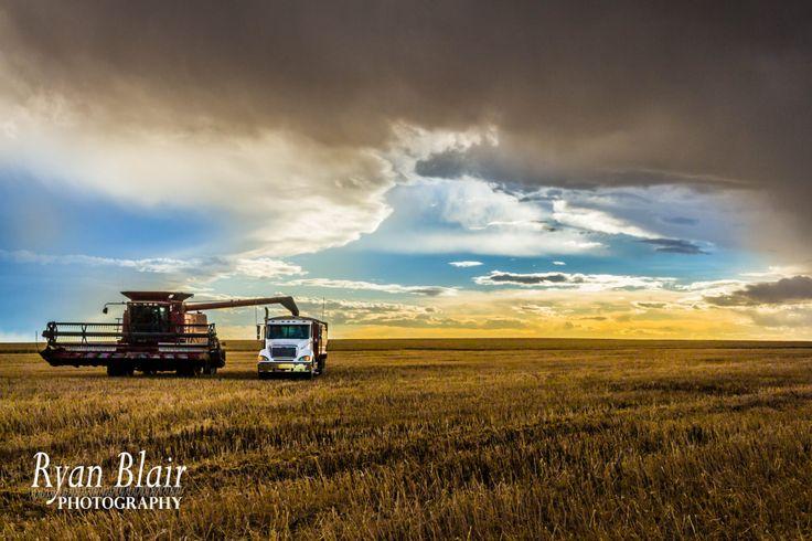 Alberta Farm Photography - Combine Unloading into Grain Truck During Alberta Harvet - Glossy/Pearl/Lustre Fine Art Print by RyanBlairPhotography on Etsy