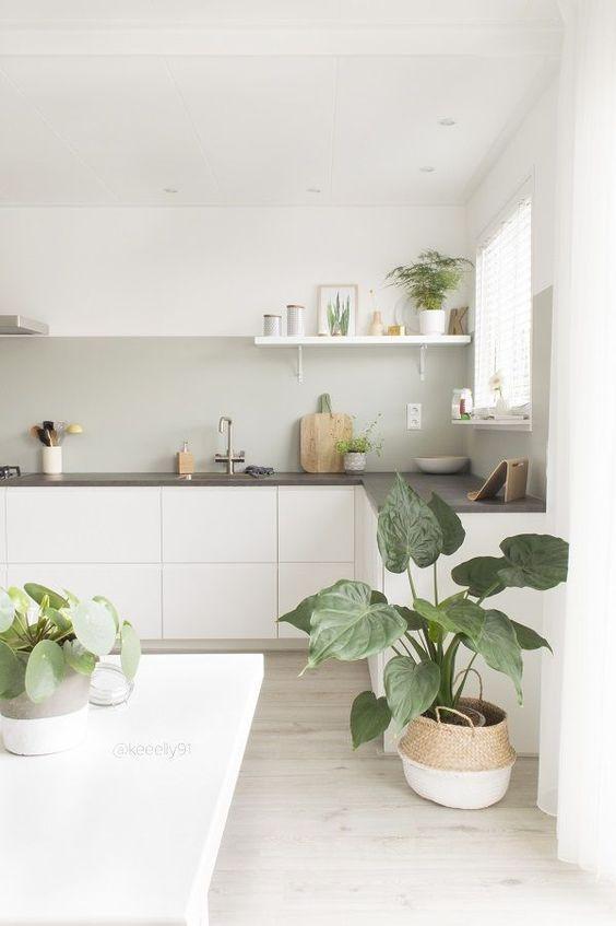Minimal kitchen with houseplants