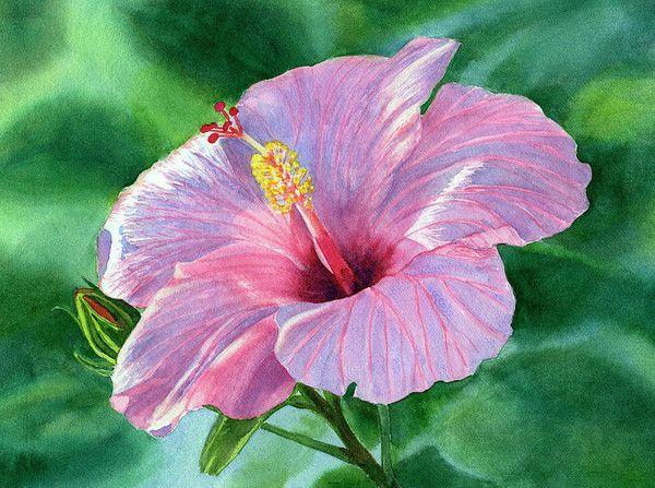 17 meilleures id es propos de arbre d 39 hibiscus sur for Hibiscus entretien exterieur
