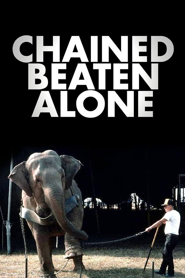 Animal cruelty circuses essays about life