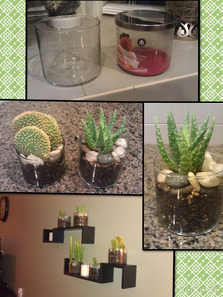 """CACTUS LOVE  """"If you love plants particularly Cactus and Succulents, then you will love this project.  Didn't know what to do with the growing pile of empty candle jars in the storage, so here is what I made out of them. Cute and saves you a lot of money. Got the cactuses from Walmart for 3-4 bucks each and transferred them to the cleaned jars, add some polished rocks on top to add beauty! You can place it anywhere in your house. Love!"""