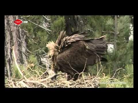 Akbaba Türleri ve Özellikleri - Yırtıcı Kuşlar | kus.gen.tr