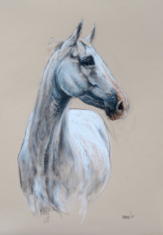 Beautiful Equine horse LE print 'Proud' by heatherirvinefineart, $39.50