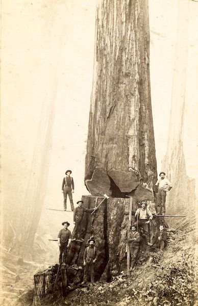 Logging in the 1800's