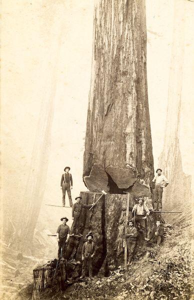 Logging (c.1850) Oregon