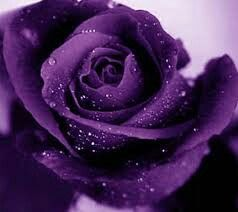 The great purple rose