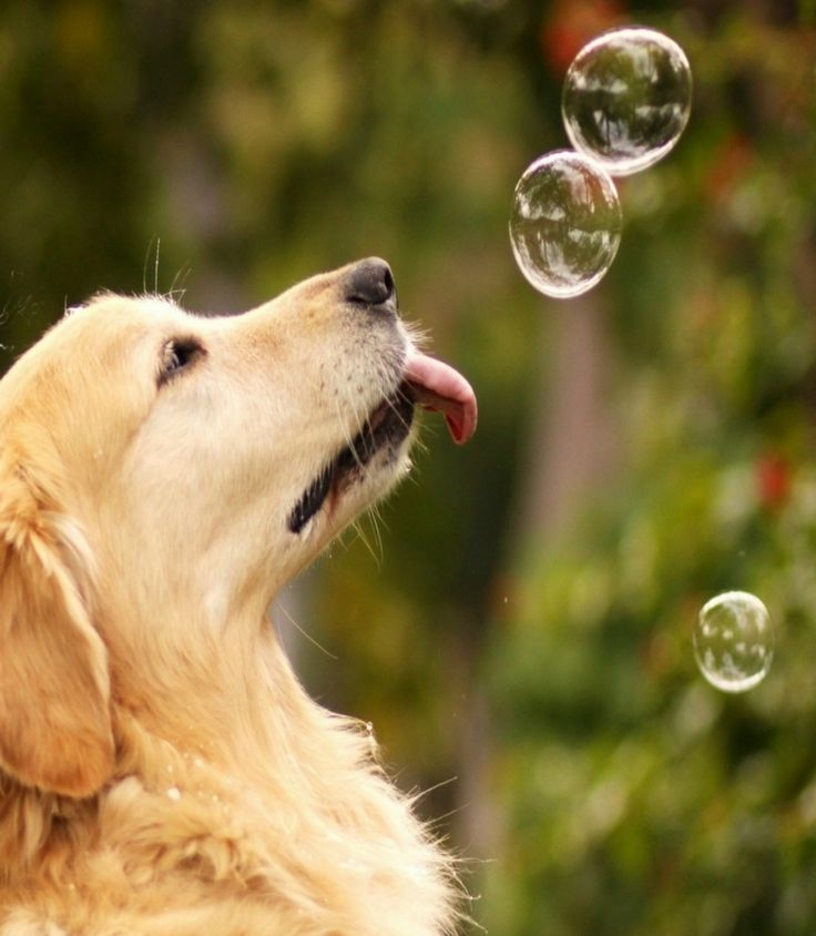 May You Always Be As Happy As A Dog Chasing Bubbles