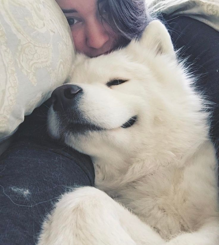 "Meeko smiles selfies (@tinkandmeek) on Instagram: ""Nap time with mom!  [Repost from my personal account @modhippiehabits !]"""