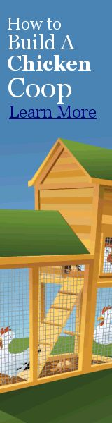 Tips On How To Build Your Own Chicken Coop From Upcycled Materials | Chicken Coop How to
