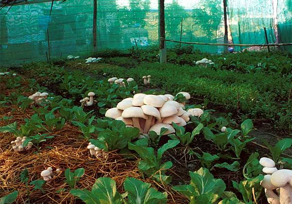 Great website for various methods for how to grow mushrooms in your garden.