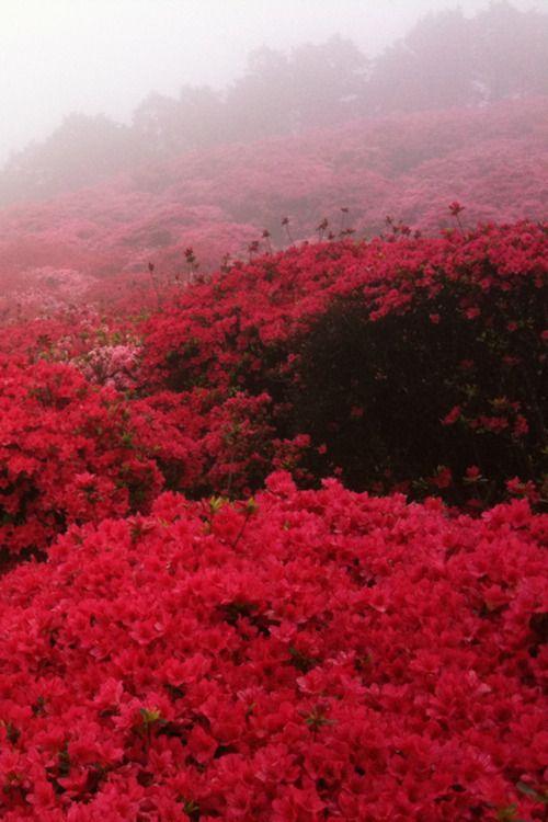 .Pink Flower, The Roads, Nature, Red Flower, Parks, Flower Gardens, Strawberries Fields, Flower Fields, Flower Plants