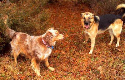 Ottawa Valley Dog Whisperer : Vitamins, Minerals & Foods that Support Oral Healt...
