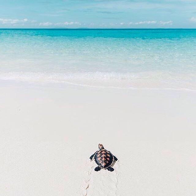 【mr.h_shuna】さんのInstagramをピンしています。 《. . 皆さん、おはようございます✨ . . 癒される写真ですよね〜 マダガスカルの青い海とカメの子供 . . 最近、考え事が多すぎて、ちょっと疲れてる時に決まって見るのが、青い海。 ガキの頃から遊び場が海だったから、海を見てるとリセットできる。 仕事放り投げて、海に行ってボーッと水平線を眺めていたい。 春になったら、決行するかも . . ちなみに、今日は大崎に行きます! 見かけたら、声でもかけてください笑 . . #今日#コーデ#スーツ#海#サーフ#西海岸#カリフォルニア#アフリカ#夏が待ち遠しい#ロンハーマン#フレッドシーガル#ホリスター#大好き#お気に入り#写真#カメラ#ファッション#summer#surf#ronherman#hollister #fashion #photography #pic#sea#madagascar #africa #love#goodmorning》