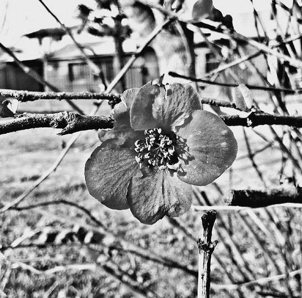 """Me llamo Olga Ávila, empece hace dos años en el arte de la fotografía trato de que mi arte sea algo sencillo, las fotos que saco es de lo que veo día a día y trato de reflejar """" mi mundo """", me he estado centrando en el mundo de la fotografía hace muy poco tiempo, mi trabajo consiste en mirar lo mas insignificante lo mas pequeño, lo mas raro y lo capturo a mi manera y creo que el arte de la fotografía no va en la cámara va en la pasión y en la forma en la que se captura el objeto."""