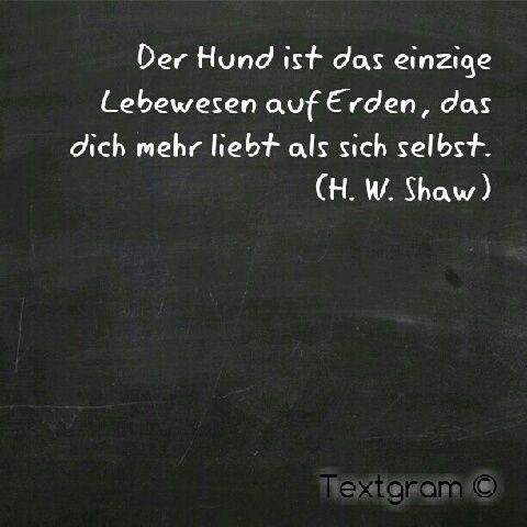 #hund
