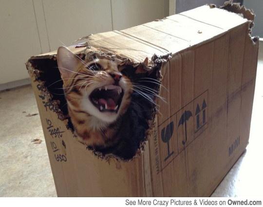 Schrödinger's cat? - | Funny Pictures | Pinterest