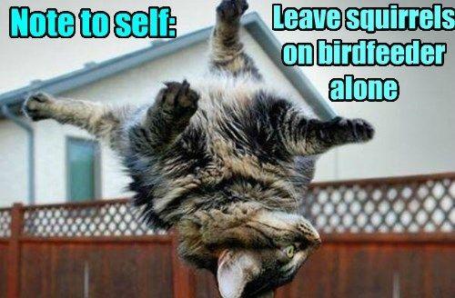 Lektion gelernt   – OMG Kitties!