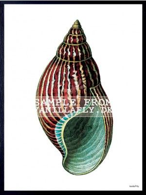 POSTER RED/GREEN CONCH 4 (3-pack) #PSC108