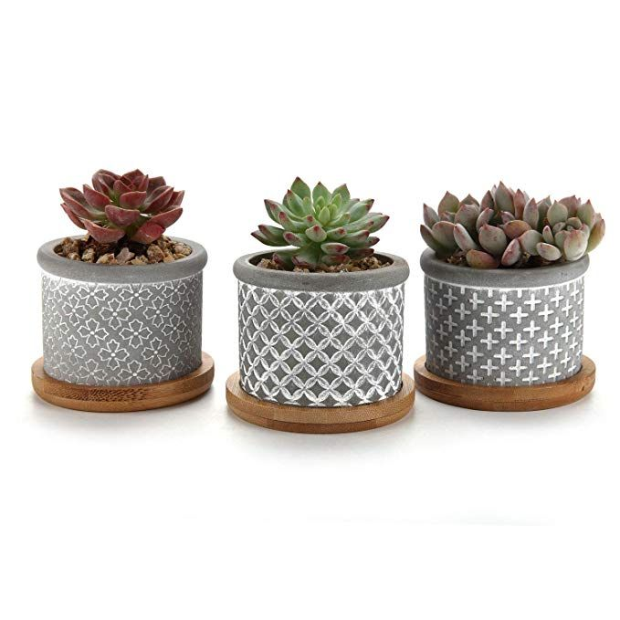 Amazon Com T4u 2 25 Inch Cement Succulent Planter Pot With Bamboo Tray Grey Set Of 3 Small Concrete Cactus Cactus Plant Pots Succulent Planter Plant Basket