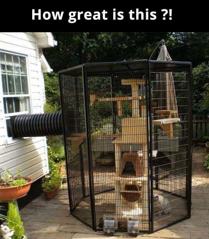 A special outdoor kennel which allows indoor cats to safely venture outside. ( Photo only. )