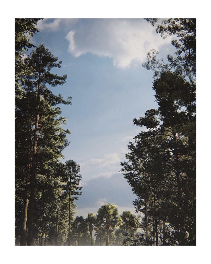 The sky is the limit at Carolina Pines. #carolinapines #landscape # 3dvideo #th ...